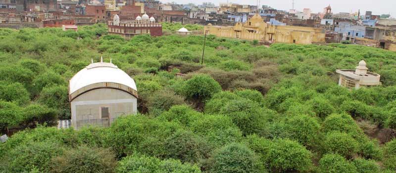 Nidhivan Temple