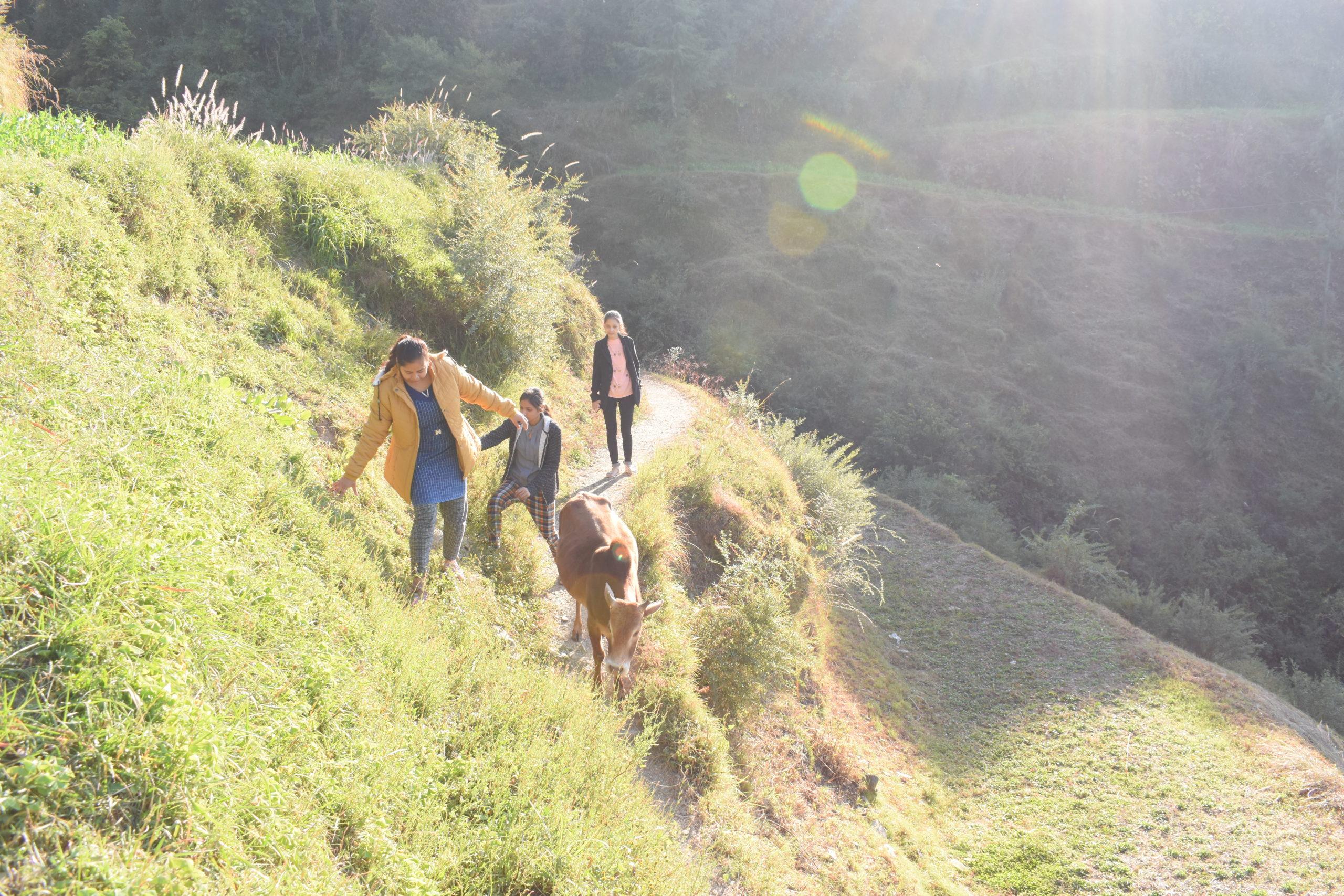 Kufri Village trek